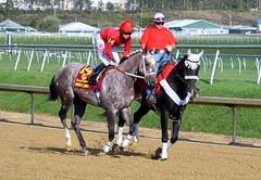 2012-10-06 (343) r7 Wesley Ho on #14 Nice Going (JLeeFleenor) Tags: horses caballo cheval photography grey photos gray lo cal jockeys ho cavallo cavalo pferd equestrian kin equine hest thoroughbreds hevonen cuddy paard cavall kon laurelpark hast ceffyl hestur perd konj capall beygir yarraman wesleyho 2012marylandmillion