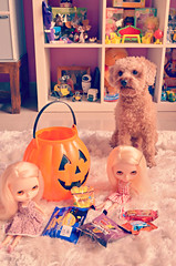 early tricksters (girl enchanted) Tags: red dog ikea halloween vintage puppy pumpkin toy dolls shelf poodle kenner blythe doggy pup bookcase 1972 candies lollies dollies toyroom expedit dollroom