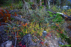 Ground Covering (Roy Prasad) Tags: lake canada nature water zeiss landscape hiking sony trail alberta banff alpha emerald prasad 15mm f28 emeraldlake distagon carlzeiss nex royprasad nex5n