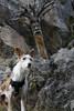Prado... (bohnengarten) Tags: dog mountain alps schweiz switzerland swiss hund alpen berner oberland kiental prad wurzelmännchen