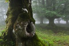 La piel del tronco (Peru Serra) Tags: rbol montaa niebla sigma1020 pentaxk5