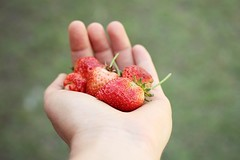 afternoon pickings from the garden... (My Darling Lemon Thyme) Tags: yum strawberries organic homegrown