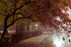 Rowntree Park (MMortAH) Tags: park york autumn trees mist fall fog 50mm nikon yorkshire 14 north explore nikkor afs rowntreepark d90