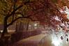 Rowntree Park (MMortAH) Tags: park york autumn trees mist fall fog 50mm nikon yorkshire 14 north explore nikkor afs rowntreepark d90