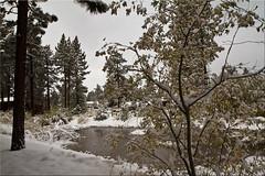 First Snowfall (Jill Clardy) Tags: ca autumn lake colors south snowstorm tahoe first lodge snowfall avalon 7975