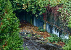 YE OLDE TENNIS COURTS! (ikan1711) Tags: autumn fall rain rainyday fallfoliage foliage wisteria tenniscourt fallscenes fallenleaves autumnscenes neglectedtenniscourt