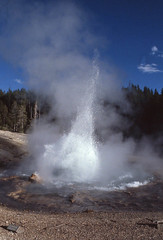 Echinus Geyser 1980... (Sea Moon) Tags: water fountain big caldera yellowstone hotspring acidic geothermal eruption erupting sinter supervolcano volcanism geyserite backbasinsplashy