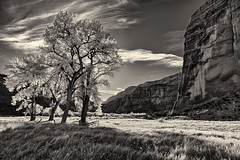 Dinosaur National Monument (glness) Tags: autumn bw fall monochrome colorado dinosaurnationalmonument cottonwoods gregness
