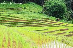 PhamonVillage-DoiInthanon-ChaengMai-Trip_By-P r i m t a a_E10886166-032