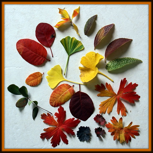 leaf sets 067-003 by jacki-dee, on Flickr