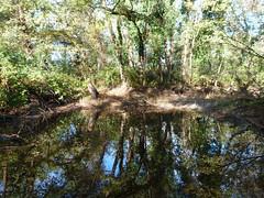 P1000080 (gzammarchi) Tags: lago italia natura paesaggio ravenna bosco riflesso pineta pianura stagno camminata impressionista itinerario