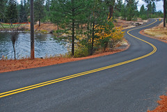 The Winding Road (junglejims photos) Tags: road autumn lake fall yellow photography drive photo washington nikon photographer pacific northwest photos pavement line clear medical photograph winding curve asphalt inland amateur junglejims d60