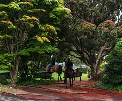 City horses (Ian@NZFlickr) Tags: horses green church space nz knox otago dunedin greenspace