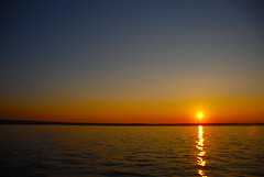 Flying solo! (ineedathis, the older I get, the more fun I have!) Tags: sunset sea sun newyork reflection bird beach colors seagull huntington longisland avian nikond80 eatonsneck