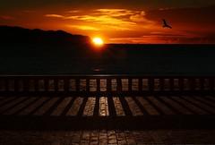 Dove la notte finisce (meghimeg) Tags: sea sun bird sunrise mare alba liguria sole 2012 uccello