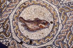 Mosaico pez Mrida (Rafael Jimnez) Tags: espaa archaeology spain mosaico 1989 slides pavimento mrida extremadura paviment diapositivas arqueologa imperioromano arteromano romaantigua aboutiberia