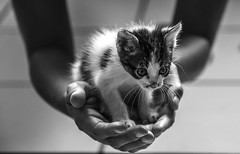 O pequeno boris (felipe sahd) Tags: city cidade cats animal brasil noiretblanc gatos fortaleza ceará felinos 123bw bemflickr…bembrasil mygearandme blinkagain