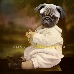 Tommy Boy (Martine Roch) Tags: boy portrait dog pet baby cute love vintage puppy square adorable surreal pug manray martineroch flypapertexture