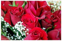 هكذا تمر الايام،، وتبقى ذكراك للابد (durooob) Tags: life flowers roses love rose وردة ورود احبك حمراء