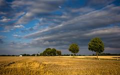 fields of gold (++sepp++) Tags: graben bayern deutschland de landschaft landscape bavaria germany feld field weizen wheat bume trees sonnig sunny wolken clouds gold blau blue