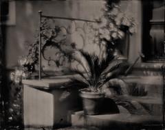 heimwarts... (IX) (Stefan Dieterich Fotografie) Tags: ruhig bw analog light blackandwhite meditative stimmung licht blackwhitephotos bokeh meditation wetplate ancient stefandieterich schwarzweiss ambrotypie 8x10 ruhe largeformat