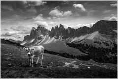Seceda (tosch_fotografie) Tags: berge wolken weide wiese wald kuh landschaft wandern klettern felsen grdnertal st christina ulrich orosei himmel blau schwarzweis schwarz weis weiss clouds sky mountains mountain cow landscape hills italy hiking walking climbing black white blackwhite olympus omd em10 12mm f20