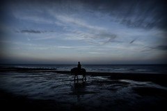 Rider on the shore (Explored) (Steve.T.) Tags: horse rider beach dusk lowlight silhouette nature seaside seafront sky nikon d7200 sigma18200 sea horseandrider horizon moody