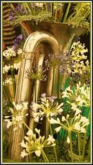 Brass and Agapanthus. (peterdouglas1) Tags: shrewsburyflowershow brassinstruments agapanthus