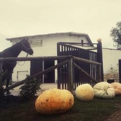 #cuadraelalisal #yegua #marea#caballos #horses #horseriding #rutasacaballo #equitacion #tiempodecalabazas