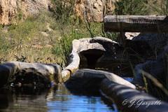 Abrevadero (J.Gargallo) Tags: fuente aragn teruel mosqueruela espaa eos eos450d canon canon450d agua tokina tokina100mmf28atxprod