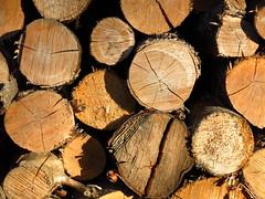 IMG_2954 well seasoned wood (jgagnon63@yahoo.com) Tags: wood texture cutwood fall autumn sidelight camp maple birch firewood