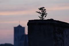 Lige 2016 (LiveFromLiege) Tags: lige liege luik lttich liegi lieja wallonie belgique belgium sunset roof saintmartin   architecture city poetry life citylife explore focus