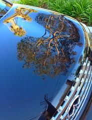 #reflections #car #carhood (Jordon Papanier) Tags: reflections car carhood
