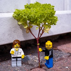  Tree (Mike Turner) Tags: apple tree appletree stevewozniak woz stevejobs  appleinc lego mini minifig minifigure legominifigure legominifig iphone steve jobs icon icons iconic leica leicaq leicaqtyp116 leicaqtype116 28mm