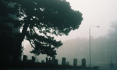 Front of St John's, Eltham (Matthew Huntbach) Tags: stjohns eltham se9 gravestones pine tree