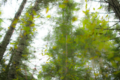 Up (leyannmeau) Tags: nature natural strathconapark beautiful turtleisland