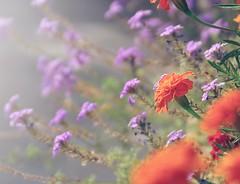 Skybound (Mega.Shots) Tags: d90 nikon flowers flora warm shallowdof sunlight