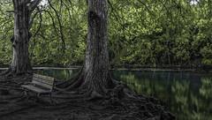 Shun (keith_shuley) Tags: sanmarcos texas sanmarcosriver riovistapark green blue aqua cypress olympusomdem1