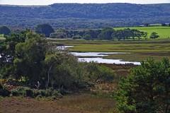 1331-09L (Lozarithm) Tags: arne rspb dorset landscape estuary pooleharbour k1 55300 hdpda55300mmf458edwr