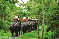 Elephant ride (SleekViv) Tags: elephant thailand nikon d90 totallythailand
