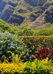 Mountain Garden (Japanorama) Tags: flowers trees cliff mountains green nature forest canon garden hawaii countryside colorful oahu gardening scenic rockface hills valley mysterious tropical environment movieset tropicalparadise kualoaranch eoskissx4