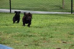 IMG_2909.JPG (highlander411) Tags: park dog orlando unitedstates florida dogpark fetch drphillips
