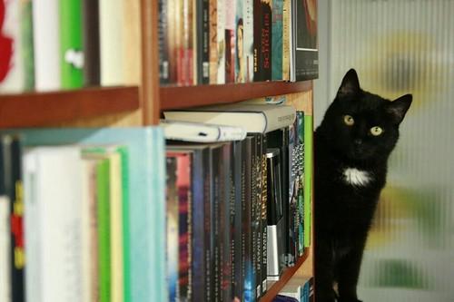 Sossi loves books