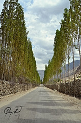 Skardu-Khaplu Road (IshtiaQ Ahmed revival to Photography) Tags: road trees pakistan cloudy popular treeline skardu northernareasofpakistan khaplu ganche ishtiaqahmed gilgitbaltistan