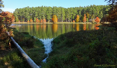 One Horse Gap Lake (3787) (sbuck1205) Tags: fallcolors shawneenationalforest onehorsegaplake