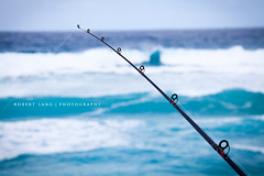 Fishing, Australia (Robert Lang Photography) Tags: ocean fish man color colour tourism beach nature water animal sport fun nationalpark fishing sand native sandy tail stock salt salmon australia nopeople coastal destination recreation sa southaustralia beachfishing ep animalia oneperson bigfish saltwater fishtail lincolnnationalpark bigsalmon chordata eyrepeninsula actinopterygii infauna perciformes australiansalmon salmonidae manholdingfish arripistrutta arripis arripidae aussiesalmon