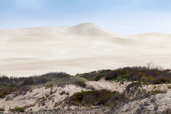Lincoln National Park, Eyre Peninsula - South Australia (Robert Lang Photography) Tags: travel tourism nationalpark sand track native sandy stock australia 4wd nopeople vegetation saltbush sa sands southaustralia scrub tranquil ep sandhill fourwheeldrive lincolnnationalpark eyrepeninsula