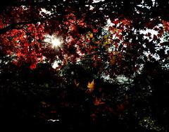 Exposure (Gareth Priest) Tags: uk autumn trees light shadow red england sky sunlight inspiration green nature beauty leaves yellow dark landscape nikon experimental glow colours natural creative warmth sunburst sunrays leafs sunbeams d5100