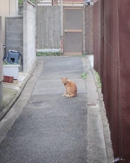 Today's Cat@2012-10-20