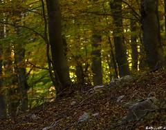 Faggeta. (Abulafia82) Tags: autumn panorama color landscape colore pentax autunno colori paesaggi paesaggio 2012 lazio k5 abruzzo ciociaria sagradellacastagna valcomino forcadacero pentaxk5 ottobre2012